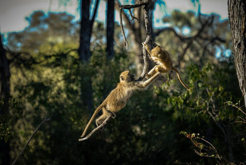 Monkeys at Play