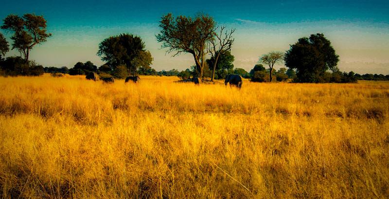 Migrating Elephant Herd