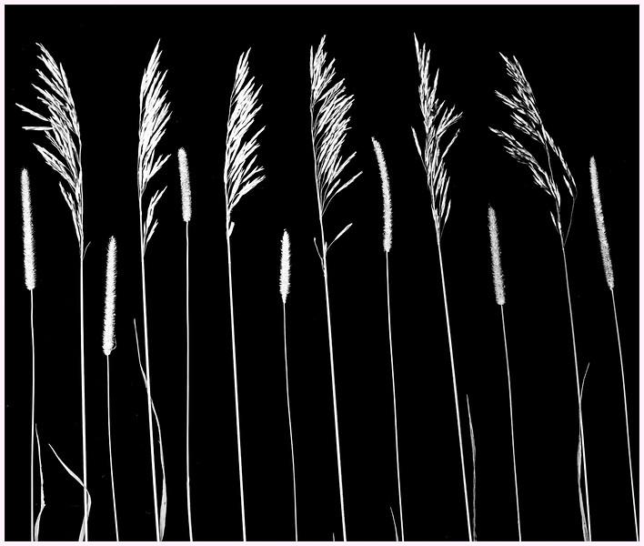 FORMAL WEEDS