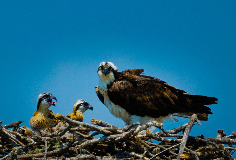 OSPREY & YOUNG