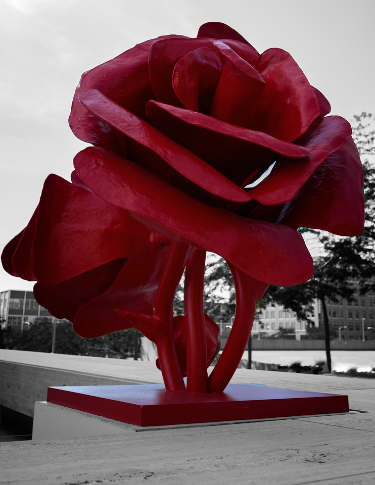 ROSE # 2 (ICON RED)