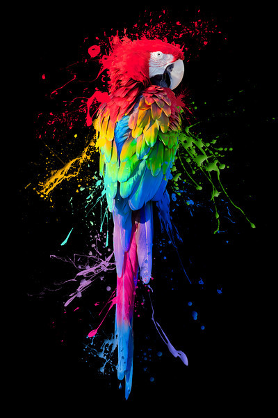 "A photo of a parrot with paint splatter to represent art ""coming undone""."