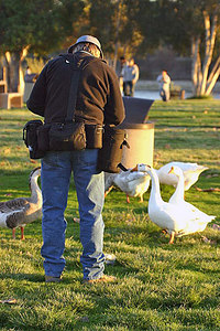 Photographing the Geese at Lake Murray Park, San Diego.  Photo by Steve Parr.