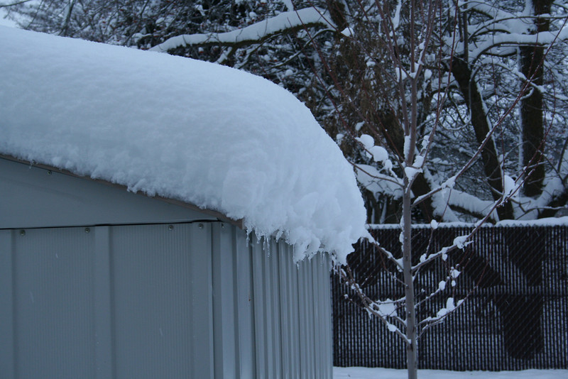 All the snow on our shed. 1/29/2008