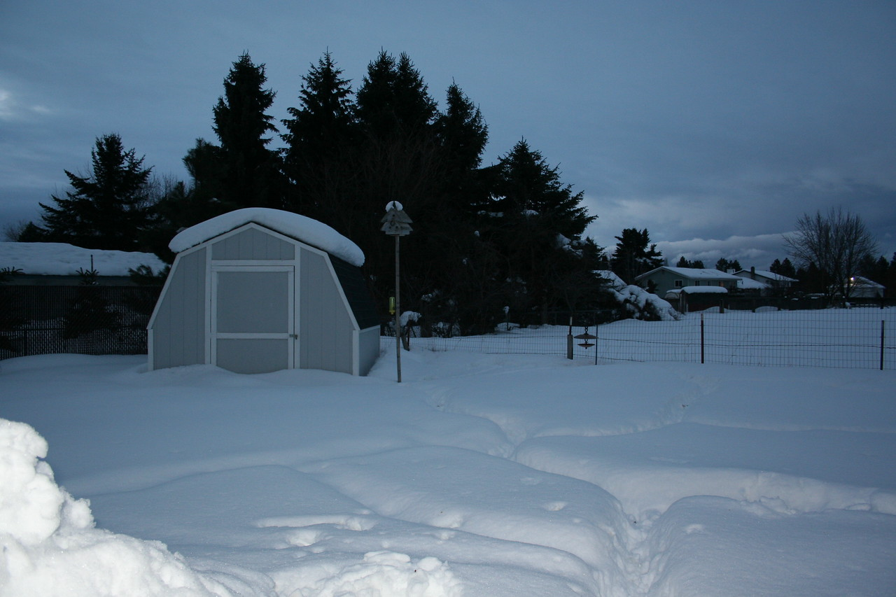 You can see all Mitch's paths in the snow. He gets lost in the paths as the snow is higher then he is. 2/7/2008