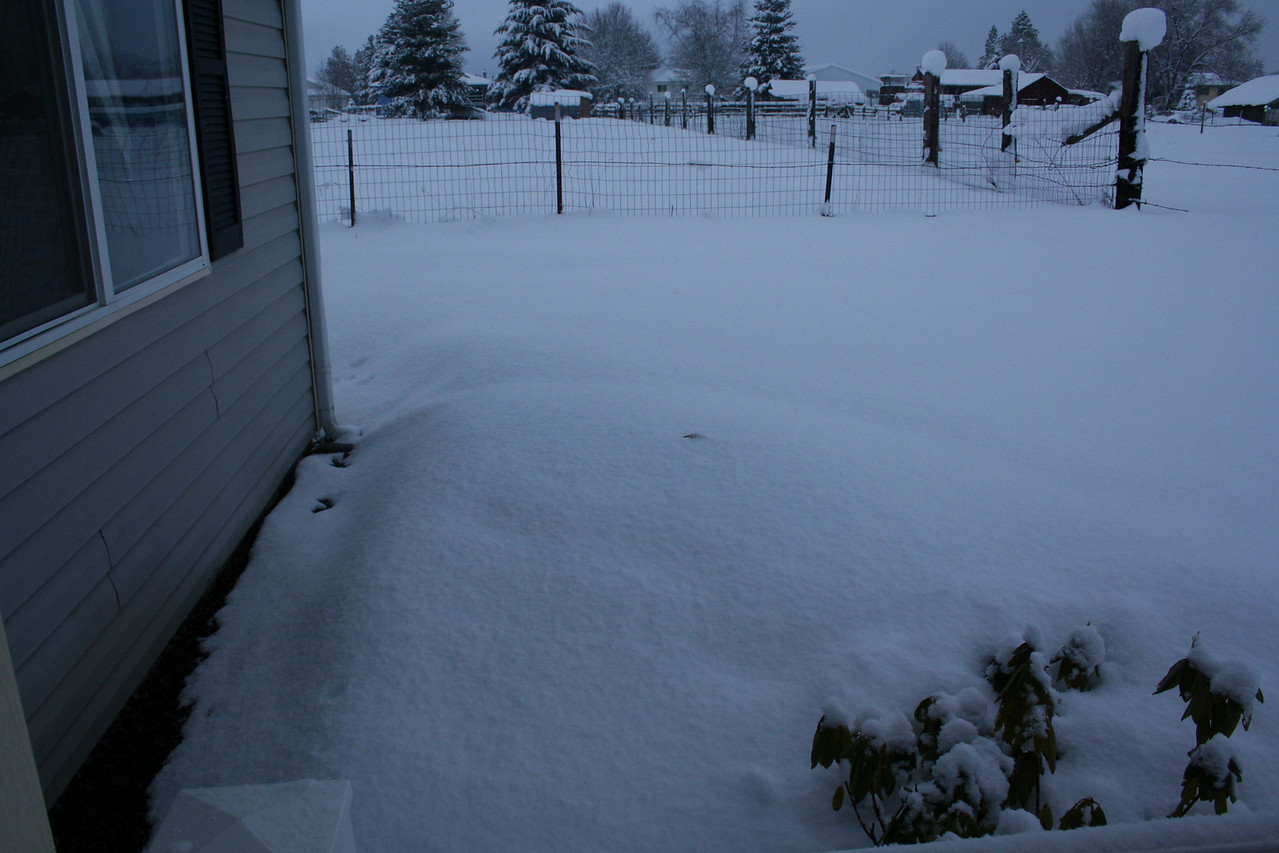 That little black spot in the snow is that sprinkler that was showing in the earlier picture. Now it is totaly covered. In about 2 feet of snow. 1/29/2008.