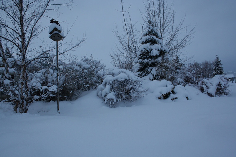 Our island is covered in snow. Can not even tell it is an island. 1/29/2008
