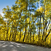 Aspens on Boreas Pass, Breckenridge, CO - 9/24/2011