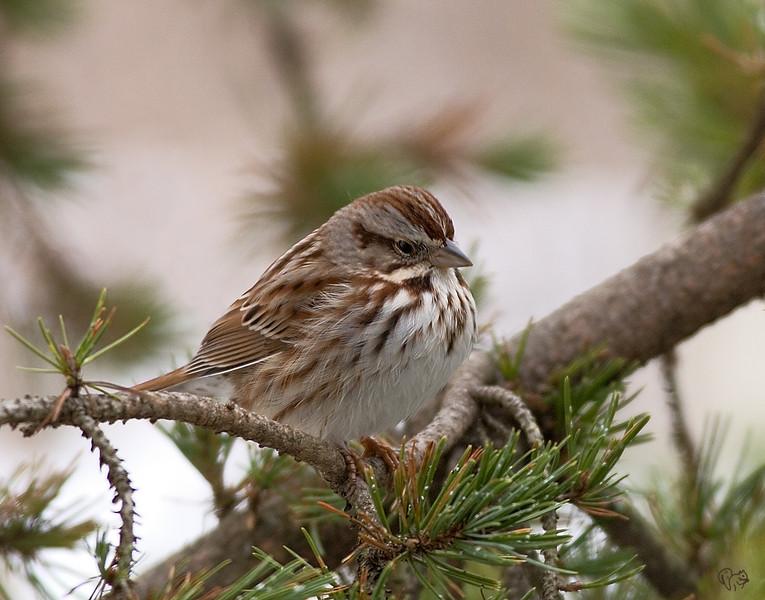Jan 23rd<br /> <br /> Birdie at Dawes