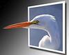 Egret Portrait OOB copy