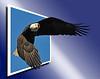 Bald Eagle 2 OOB