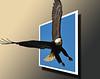 Bald Eagle 3 OOB