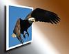 Bald Eagle  OOB