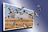 Flight of Ducks 4OOB