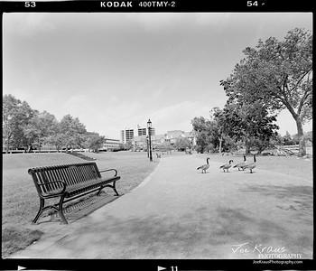 Park Patrons