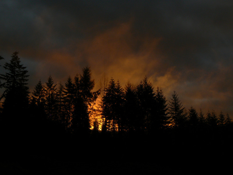 Sunset through the Douglas Fir forest looking Southwest off the back deck at the house in Duvall, Winter 2008