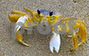 P1110098 Ghost Crab 1 procon
