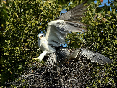 Parent taking off after a food drop off.