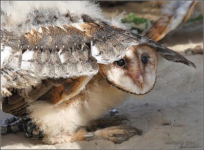 Hiding under bros wing