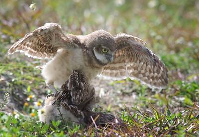 owlet speed bump.