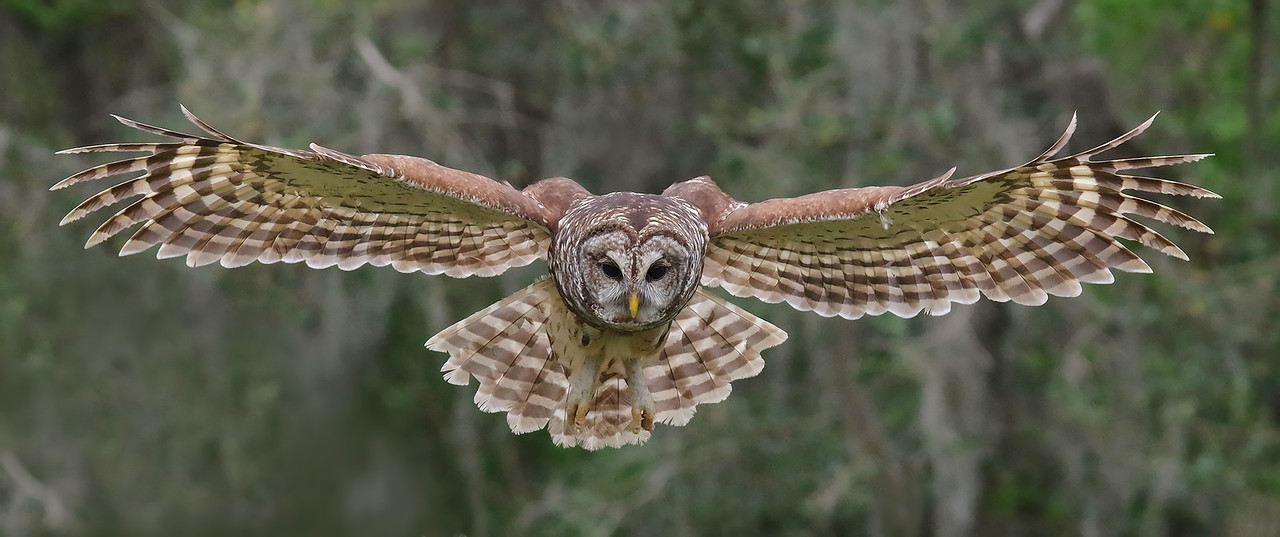wingspan.