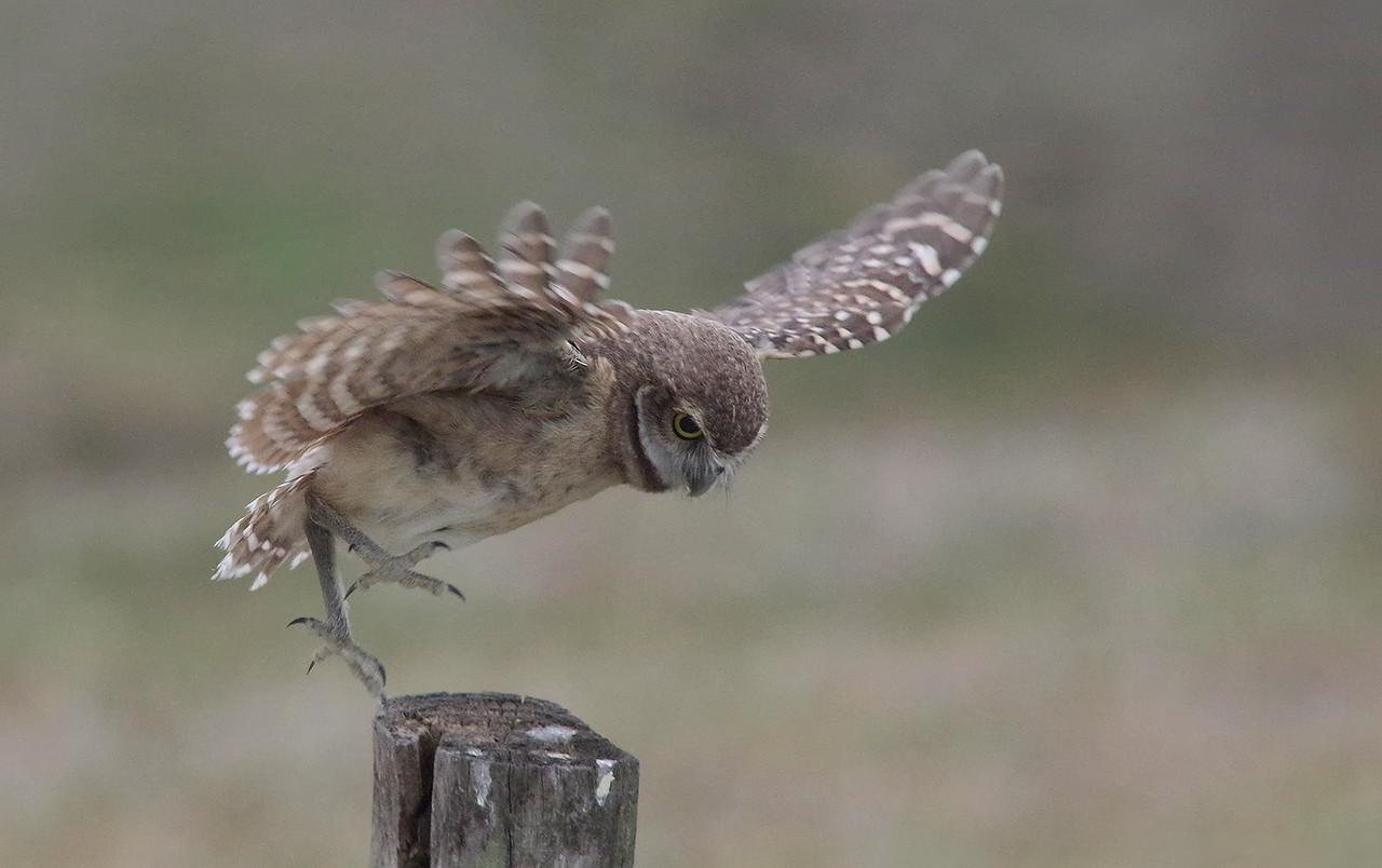 tip toe landing.