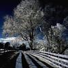 Oxon Hill Farm Infrared 144 copy