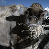 Oxon Hill Childrens Farm IR 2011 028 copy