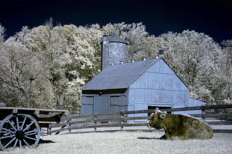 Oxon Hill Farm Infrared 023 copy