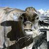 Oxon Hill Childrens Farm IR 2011 029 copy