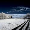 Oxon Hill Farm Infrared 055 copy