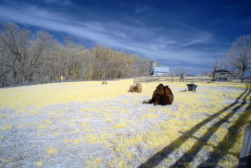 Oxon Hill Farm IR March 15, 2012 035 copy