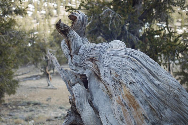 Bristlecone Forest, California