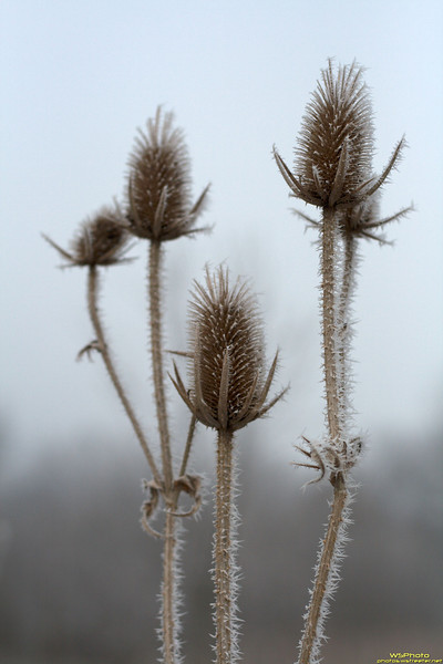 Photo of frozen fog clinging to some plants at the Rieth Interpretive Center in Goshen, IN.