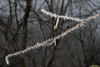 Photo of frozen fog clinging to a tree branch at the Rieth Interpretive Center in Goshen, IN.