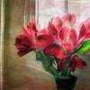 Flowers -Digital Painting