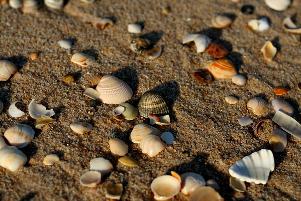 Shells – Ilha de Tavira, Portugal