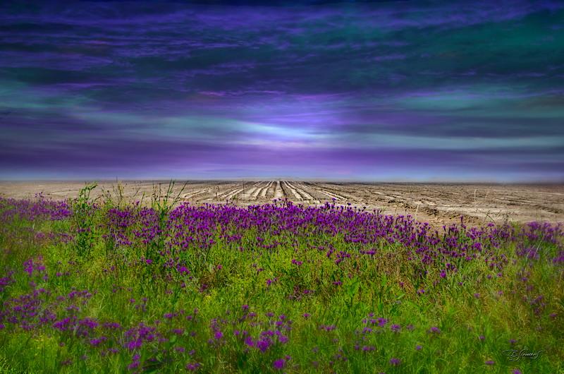 'BEYOND THE WILDFLOWER'