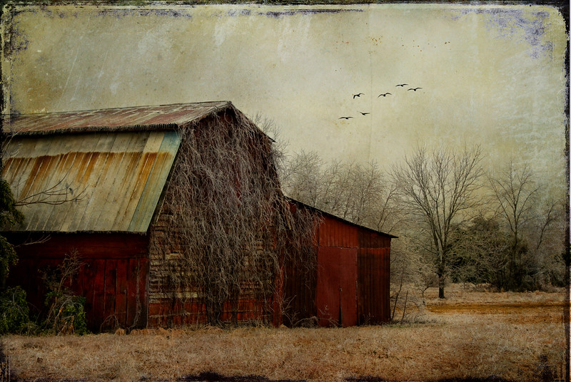 """THE RED BARN"""
