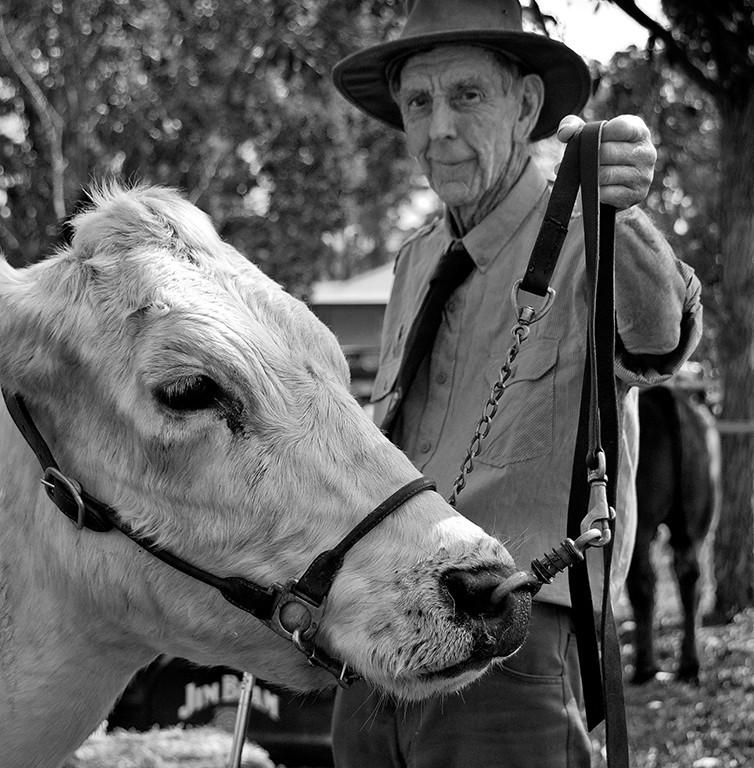 A farmer showing cattle at Nimbin.