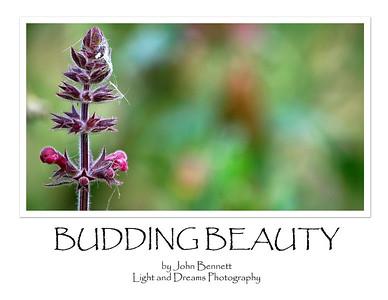 Budding Beauty