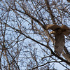 March 3, 2012 - Red Tailed Hawk