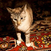 January 12, 2012 - Some nights, even the cat dosen't want to cooperate