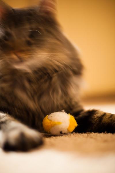 January 6, 2012. Saki Cat