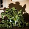 January 4, 2012 - Killer Kale