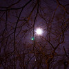 January 30, 2012 - Trees reaching for the moon