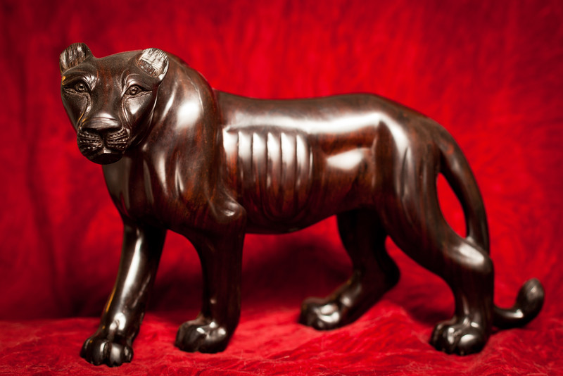 January 17, 2012 - Lioness