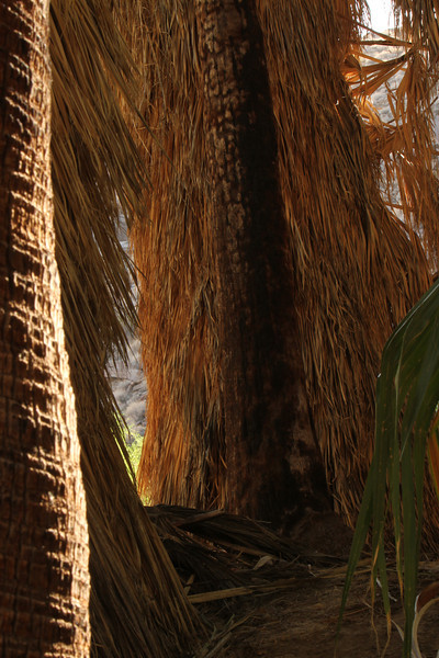 """Andy thought this photo """"rocked"""" - a framed study in light and contrast @ f 22 on a tripod. I like the light and texture of the dense palm grove."""