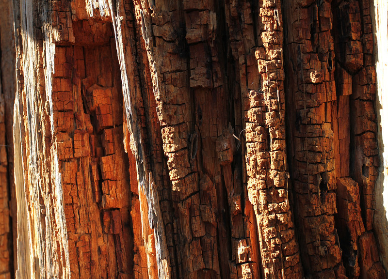 Details of tree decaying slowly over time - early evening light.
