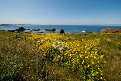 Newport Wildflower-scape